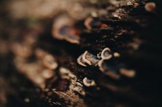 Photo by Tessa Cheetham  #leaves #plants #forest #nature #outdoors #green #bushes #trees #mountglorious #australia #photography #naturephotography #free-lens #free-lensphotography #freelensphotography #mushrooms #fungud #log