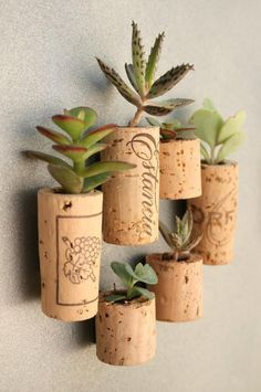 """Succulents planted in hollowed out wine corks! Hot glue a thumb tack to one side and you can arrange your """"garden"""" on a bulletin board! Glue a strong magnet to one side and you have a hanging garden for you metal cubicle at the office! Or just pierce a little hole in the cork, hammer a tiny nail into your walls and hang your garden there!"""