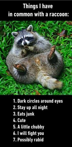 Things I have in common with a raccoon:  1. Dark circles around eyes.  2.  Stay up all night.  3.  Eats junk.  4.  Cute.  5.  A little chubby.  6.  I will fight you.  7.  Possibly rabid.               (Posted to my page 8/31/16.)