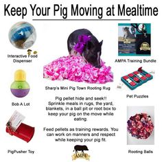Get your mini pig moving at mealtime with some of the best toys and enrichment activities. Pet Pigs, Baby Pigs, Mini Pig Food, Mini Potbelly Pigs, Juliana Pigs, Micro Mini Pig, Pig Showing, Book Libros, Miniature Pigs