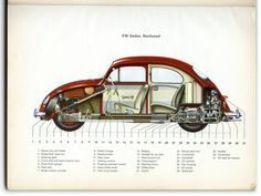 Beetle cut out chart