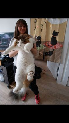 Big kitty'