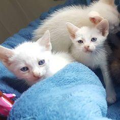 G.A.R.R.A. - Grupo de Ação, Resgate e Reabilitação Animal: Adote ou ajude um gatinho do G.A.R.R.A.!