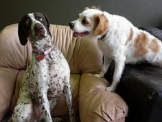 15 Pet Duos Who Are Exactly Like You & Your Best Friend