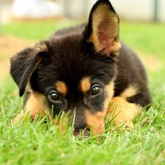 Image from http://www.lifewithdogs.tv/wp-content/uploads/2014/03/3.21.14-National-Puppy-Day5.jpg.