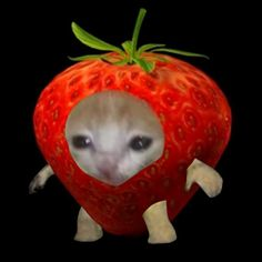 Animal Memes, Funny Animals, Cute Animals, Sad Cat, Cat Icon, Kittens, Cats, Cat Face, Stupid Funny Memes