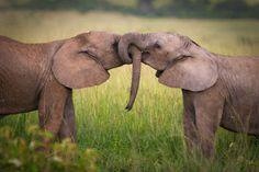 Si tomáramos algunos consejos de los elefantes, habría MUCHO más amor en el mundo: