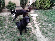 dog training: sit | A dog's paw Dog Paws, Dog Training, Walks, Your Dog, Dogs, Animals, Animales, Animaux, Dog Training School