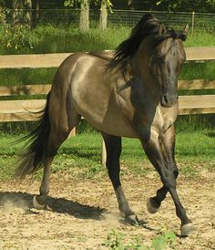 beautiful horse, just found one like this for sale in California.  Kinda want one!