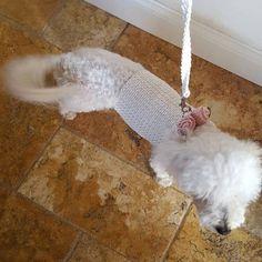 Items similar to Pet Clothing, Dog Sweater, Small Dog Clothes, Crochet Dog Sweater, Pet Sweater by BubaDog on Etsy Crochet Dog Clothes, Cute Dog Clothes, Small Dog Clothes, Knit Dog Sweater, Crochet Dog Sweater Free Pattern, Custom Dog Shirts, Small Dog Sweaters, Pull Crochet, Dog Wedding
