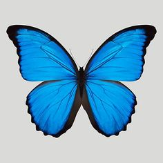Tattoo butterfly blue papillons 34 Ideas for 2019