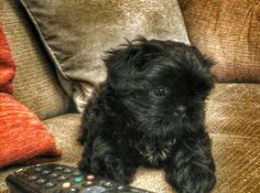 Whoopi age 9 weeks old soo cute!