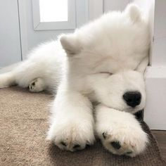 Image in Cute and Cuddly collection by Lauren Super Cute Puppies, Cute Baby Dogs, Cute Little Puppies, Cute Dogs And Puppies, Cute Little Animals, Baby Puppies, Cute Funny Animals, Doggies, Fluffy Dogs