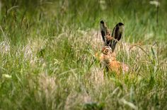 Wild bunny by Marek Weisskopf on 500px