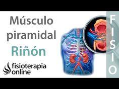 El Síndrome Piramidal consiste en una contractura o espasmo involuntario del músculo piramidal; músculo que va desde el sacro hasta el trocánter mayor del fémur debajo de los músculos glúteos.