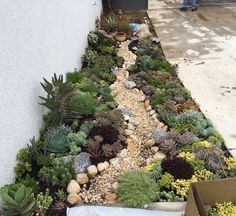 Suculant Garden, Succulent Rock Garden, Succulent Landscaping, Succulent Gardening, Planting Succulents, Mosaic Garden, Landscaping Retaining Walls, Landscaping With Rocks, Front Yard Landscaping