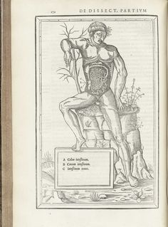 """Estienne, Charles (ca. 1504-ca. 1564), De dissectione partium corporis humani libri tres, page 172. Charles Estienne took an early and avid interest in anatomical dissection and began preparing a monumental anatomical text in the 1530s with surgeon, anatomist, and artist Étienne de la Rivière (d. 1569). A majority of the work was complete by 1539 with woodcuts by the famed Jean """"Mercure"""" Jollat (fl. 1530-1545), but Estienne and La Rivière began a feud from which a lawsuit ensued. ..."""