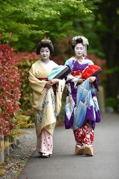 "geisha-kai: "" May 2016: geiko Satsuki and maiko Mitsuki, ""sisters"" from Gion Kobu by tiger123 - blog """