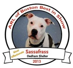 """In the spirit of the Westminster Dog Show, which is wrapping up today in NYC, the Animal Rescue League of Boston is featuring our very own finalists for """"Best In Show"""" highlighting our favorite breed, """"RESCUE!"""" All of the dogs are available for adoption.  We're letting you choose who is the overall """"Best In Show."""" To vote for your favorite, write his or her name in the """"comments"""" section. #Dogs #Puppy #Animals #Pets #ShelterDogs #Adopt"""