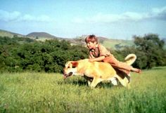 Kevin Corcoran, the youngest son in 'Old Yeller,' dies at 66 from complications of cancer on 10/7/15.