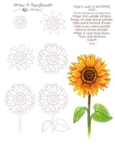 Dessin d'un tournesol 1680 ... Good way to draw and color a sunflower...great for a rock!!
