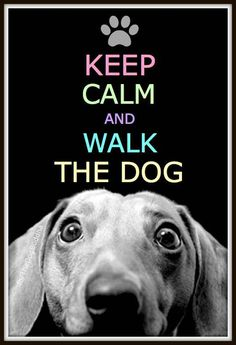 Keep calm and walk the dog :)