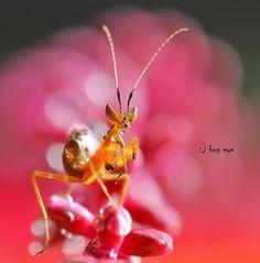 Mantis - Fotografia good morning ! de bug eye :) na 500px