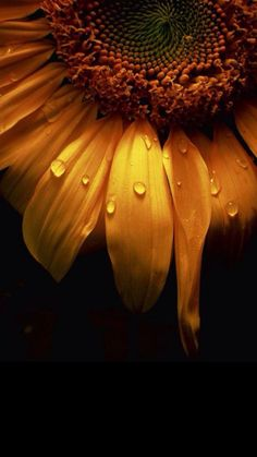 Ideas For Flowers Background Wallpapers Orange Flower Background Wallpaper, Sunflower Wallpaper, Nature Wallpaper, Sunflower Pictures, Sunflower Art, Sunflower Clipart, Best Iphone Wallpapers, Cute Wallpapers, Aesthetic Iphone Wallpaper