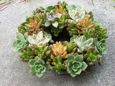 Moss Succulent Centerpiece Form with Clear by SucculentSalon