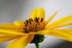 Molte di quelle che noi definiamo #erbe infestanti sono invece delle #prelibatezze! Ecco un articolo utile per imparare a riconoscere le erbe #selvatiche commestibili