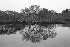 Kathryn Jewkes - NSW Central Coast Photographer - Reflection
