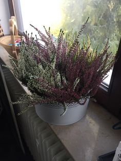 What plant is this? Want to know how to take care of it.