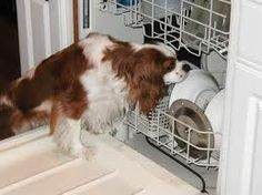 """""""hehehehehe....I just love the new improved 'no need to rinse dishes first' dishwashers!  All the pups like them!""""  Google Image Result for http://www.i-love-cavaliers.com/Images/Dishwasher%2520e.JPG"""