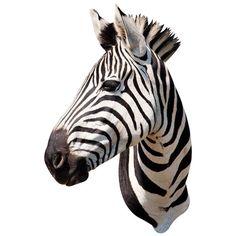 Zebra Head Adhesive Taxidermy by WallsNeedLove on Etsy, $55.00
