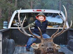 Elk hunt #elkhunt