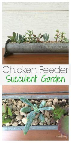 Antique Chicken Feeder repurposed into a DIY Home Succulent Garden! A great decor idea!