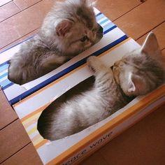 So cute!!  by iloveshowpo