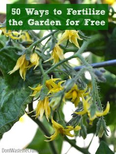 50 Ways to Fertilize the Garden For Free | A huge list of things you can use in your own home to help feed your garden and plants!