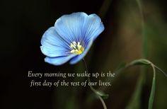 Every morning we wake up ...
