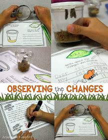 Butterfly life cycle activities and learning labs