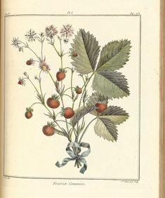 fruits-00212 - Strawberry, 1 [3974x4760]