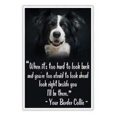 LOVE BORDER COLLIE POSTER
