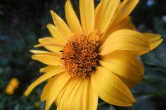 Flowers from my garden - 178