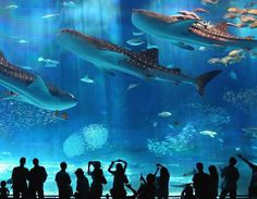 okinawa churaumi aquarium, japan  I love aquariums... seriously, like more than is normal