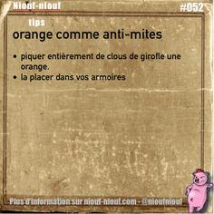 niouf-niouf:  Tips Niouf-niouf : des oranges anti-mites #orange...