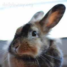 Bunny, your cheeks look so soft! - August 5, 2015