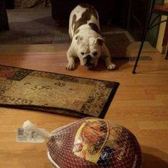(3) Baggy Bulldogs - Timeline Photos