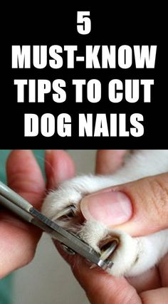 How to Cut Dog Nails Without Making Your Dog Hate You - Want to try clipping your dog's nails at home? Unless your pet is a very active outdoor dog his n - Clipping Dog Nails, Trimming Dog Nails, Dog Health Tips, Pet Health, Health Care, Dog Grooming Tips, Havanese Grooming, Dog Clippers, Yorky