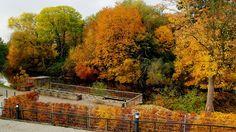 Auch am Altarm in Saarlouis,  ...  hält sich heute noch der Hochnebel. Aber bunte Herbstfarben gibt es trotzdem. :-)