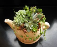 how about a cup of succulent tea?